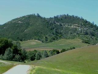 カレラ・ミルズの畑