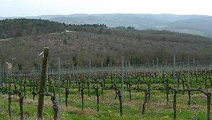 ポッジオ アル ソレの葡萄畑