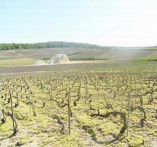 シャンパーニュ アンドレ クルエの畑