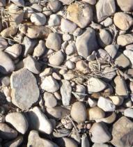 ハラ村の土壌