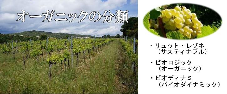 自然派ワイン分類カテゴリ