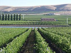 クウィルセダ クリークの畑